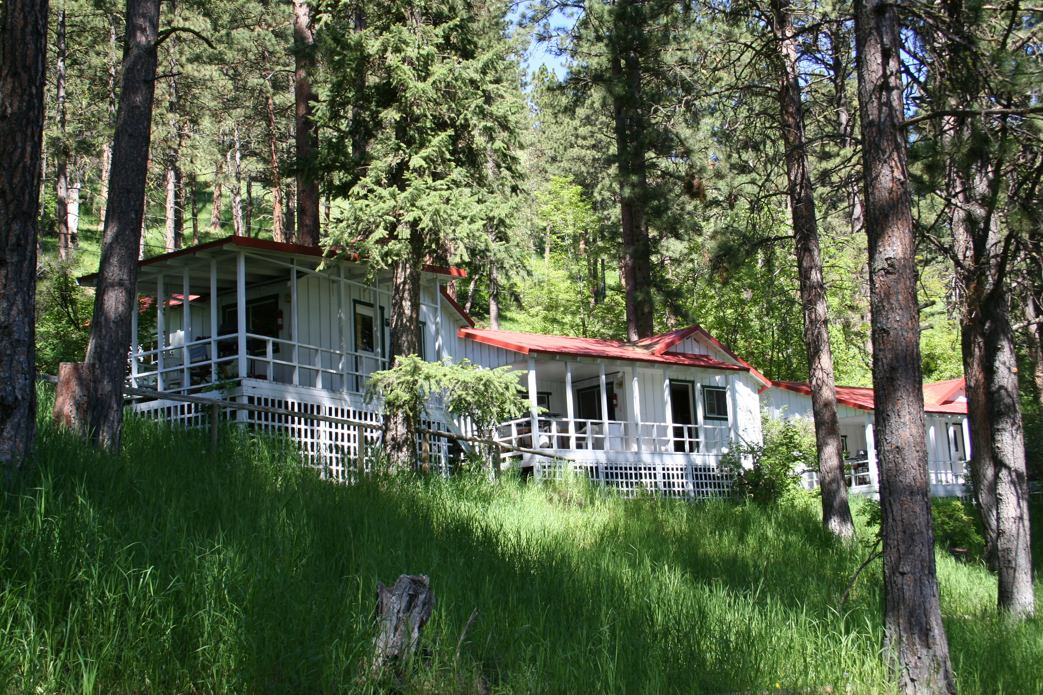 cabins among the trees